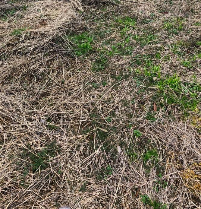 サンフーロン除草剤