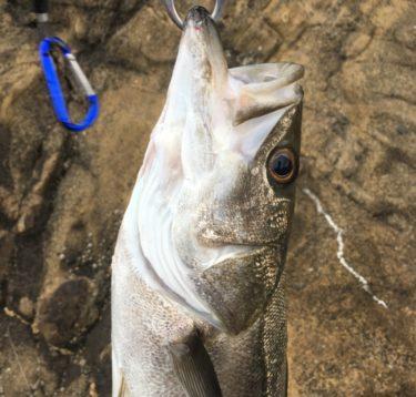 【ルアー】2019年最も釣れた・釣れなかったジグ、バイブ、ミノーを振り返る